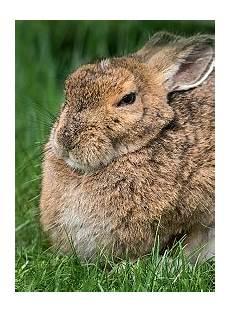 Kaninchen Senioren Und Ihre Bed 252 Rfnisse Verband
