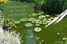 Schwebealgen Im Teich Bek 228 Mpfen 9 L 246 Sungen Zum Entfernen