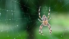 angst vor spinnen arachnophobie das hilft bei spinnenphobie