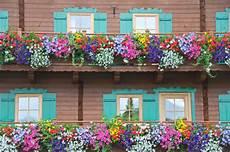 sommer auf dem balkon sommerliche bl 252 tenpracht die sch 246 nsten blumen f 252 r balkon