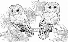 Malvorlagen Eulen Gratis Print Owl Coloring Pages For Your