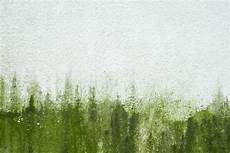 algen auf pflastersteinen entfernen der fassade algen entfernen 187 so wird s gemacht