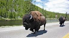 Bison Futé 2016 Comment Est N 233 Bison Fut 233 199 A M Int 233 Resse