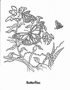 animals coloring pages coloring pages for kids