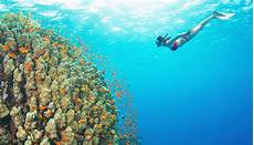 diving calabria the 5 best places where to snorkel and dive
