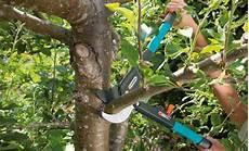 bäume schneiden bei baumschnitt selbst de