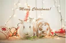 christmas rabbit zoeken kerstmis christmas pinterest rabbit merry christmas and