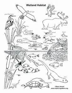 coloring pages of nature and animals 16380 animal habitat coloring pages animal habitat coloring pages animal habitat coloring pages animal