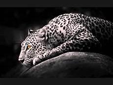 dj rolando jaguar dj rolando jaguar quot original mix quot