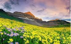 Flower Valley Wallpaper by Flower Hd Wallpaper Background Image 2560x1600 Id