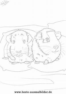 ausmalbild meerschweinchen mit bildern ausmalbilder