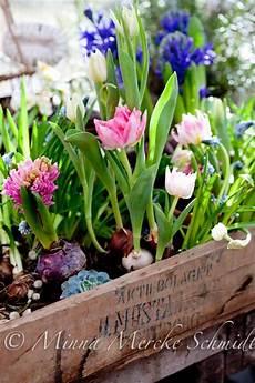fleur d hiver pour jardinière fleurs jardiniere printemps