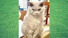 Kumpulan Gambar Kucing Lucu Dan Imut Yang Menggemaskan