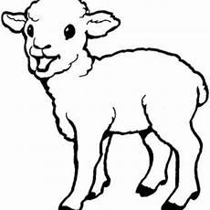 baby sheep drawing at getdrawings free