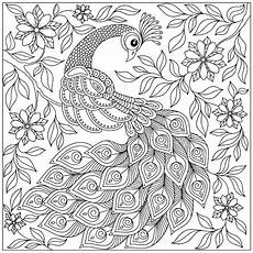 peacock among the flowers peacocks coloring pages