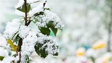 winterharte pflanzen diese gew 228 chse sind immergr 252 n
