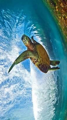Unterwasser Tiere Malvorlagen Xing Photography Of Clark Animalphotography Animal