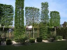 Hohe Sichtschutz Pflanzen - sichtschutzkombinationen teil 5 spalierb 228 ume hecke am