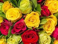 Le Code Des Roses Signification De Toutes Les Couleurs