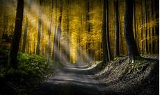 Nature Path 4k Wallpaper by Forests Roads Rays Of Light 5k Hd Nature 4k Wallpapers