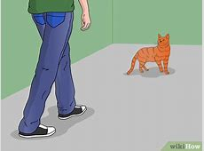 how to a cat
