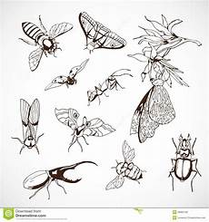 insekten satz gezeichnet vektor abbildung