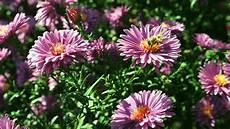 Garten Einmaleins Stauden Pflanzen Und Pflegen Themen