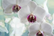 sind orchideen giftig f 252 r katzen katze ratgeber de