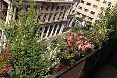 terrazzo fiorito un terrazzo fiorito colombo green philosophy