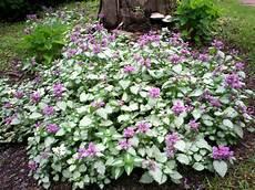 plantes couvre sol pour le soleil pour l ombre arbustes
