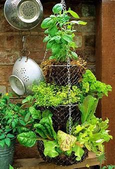 Kitchen Garden A To Z by Dishfunctional Designs Hanging Basket Herb Garden Diy