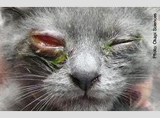 cat pneumonia contagious