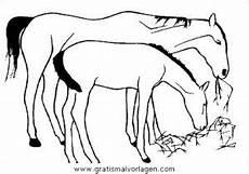 pferde 09 gratis malvorlage in pferde tiere ausmalen