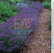 Details Zu 0003154711 Gartengestaltung Gartenweg Mit