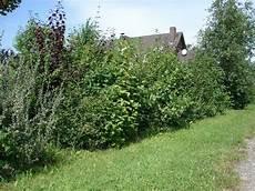 Pflanzen Mit Anwachsgarantie 220 Berblick