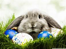 30 easter bunny pictures and images