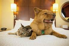 the top 12 pet friendly hotels in the usa travel us news