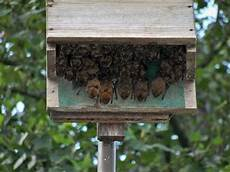 bat conservation international bat house plans triple celled bat house organization for bat