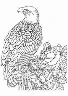 Ausmalbilder Zum Drucken Adler Ausmalbild Adler Und Zum Ausdrucken