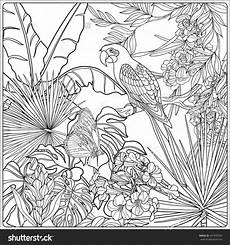 jungle plants coloring pages at getdrawings free