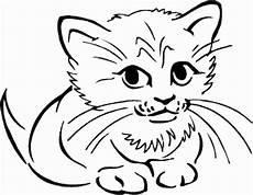 Katzengesicht Malvorlage Simple Cat Drawing At Getdrawings Free