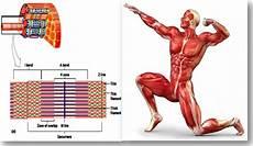 Makalah Ergonomi Industri Sistem Kerangka Dan Otot Manusia