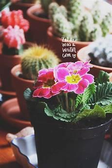 frasi i fiori fiori frasi una primula non fa primavera was