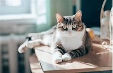 Votre Chat Aime Faire Tomber Les Objets Par Terre Voil 224