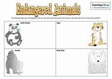 endangered animal worksheets 14298 endangered animals activity teaching ideas