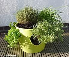kräutergarten küche selber machen kr 228 uter auf kleinem raum im topf ganz einfach selbst anbauen