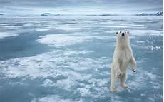 polar backgrounds animals white arctic polar snow frozen sea