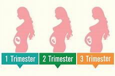 sauna schwangerschaft 1 trimester uterus during pregnancy its size changes and