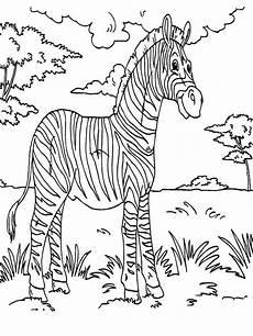 zebra rainforest animals coloring page print