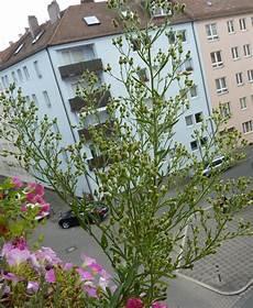 welche pflanze w 228 chst auf meinem balkon pflanzen